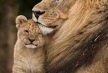 Wildlife   Zuid-Afrika / De mooiste wildlife foto's uit Zuid-Afrika!