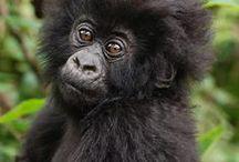 Wildlife   Oeganda / De mooiste wildlife foto's uit Oeganda!