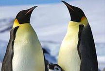 Wildlife   Antarctica / De mooiste wildlife foto's vanaf Antarctica!