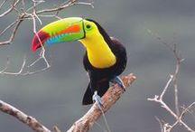 Wildlife   Brazilië / De mooiste wildlife foto's uit Brazilië!
