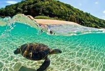 Wildlife   Griekenland / De mooiste wildlife foto's uit Griekenland!