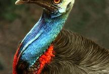 Wildlife   Australië