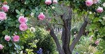 Дворики, сады, Италия, Прованс