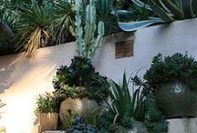 House and Garden / by Sarah Benson