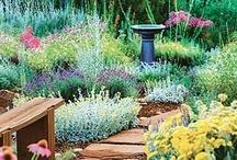 My Secret Garden / by Sarah Bancroft