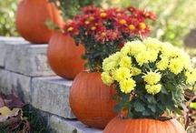 The Season: Fall