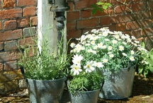 Garden / Landscaping