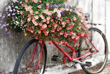 SecreT GardeN / Dream Garden / by JuDi BuNNi