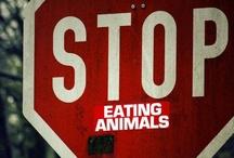 Vegetarians Don't Eat Their Friends  / by Hailey Caracio