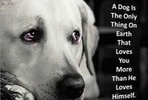 Pets / by Kathy Joiner
