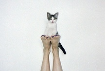 Kitty / by Miss Unkon