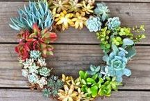O O Obsessed with wreaths / um, wreaths.