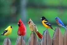 Backyard Birds / by Dodie Dee
