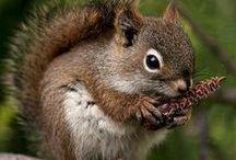 Squirrels / by Dodie Dee