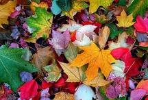 Fabulous Fall! / by Dodie Dee