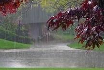 Rain / by Dodie Dee