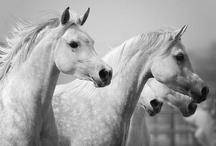 Horse-iess