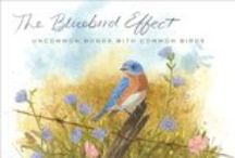 The Bluebird Board / Inspired by Julie Zickefoose's THE BLUEBIRD EFFECT, the beautiful story of a life among birds. This board includes some of Julie's watercolors and sketches, which you'll also find in the book!  / by Houghton Mifflin Harcourt Books