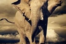 Elephants Everywhere! / I have always thought Elephants were extraordinary. Truly beautiful and amazing. / by Deborah Baxter