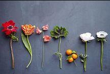 Floral / by Randy Colman