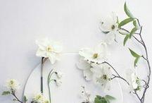 Flowers / Flowers, flowers, flowers....