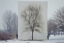 TREE / All things tree related / by Jody Koomen