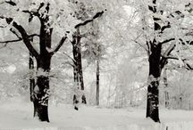 Inspiration - Winter Wonderland