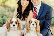 Pet Friendly Weddings / Don't forget to include all loved ones in your wedding plans.  Pets make the most adorable guests!