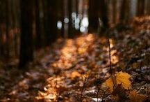 . autumn / thanksgiving .