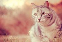 Crazy Cat Lady / by Amber Asakura Photography