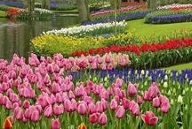 Charlotte Gardens & Landscaping / Having 4 seasons, Charlotte NC residents enjoy beautiful landscaping year round.