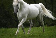 horses :)