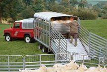 Ifor Williams Livestock Trailers