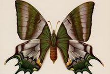 love bugz / Bugs fascinate me. Not only are they beautiful, they are strong and their wee forms are amazing. LOVE BUGZ