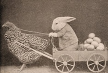 Here comes Peter Cottontail... / by Elaina Smith