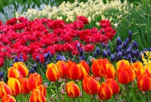 Flowers...Beautiful Flowers / Gorgeous flower varieties from across the world