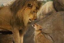 The AMAZING Beauty of Animals