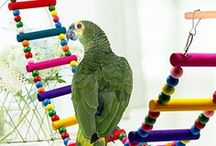 Birds Cages, Toys and Feeders