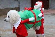 Christmas Gifts for Pets - Merry Christmas!!!