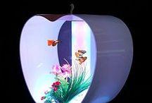 Fish Aquariums and Bowls