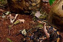 Reptile Terrariums, Habitats and Food Bowls
