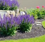 Home Landscaping Tips