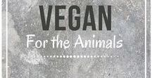 Vegan for the Animals / Adorable animals! Follow for the cutest animals from around the web :)