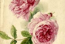 Botanical art prints / by Urania Pantini