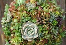 Succulent / by Jayme Cohn