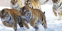 Allemaal beestjes. Animals of all kind. / Wilde dieren. Wild animals.