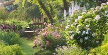 Bloemen en planten. Plants and flowers. / Alles over de tuin. Everything about the garden.