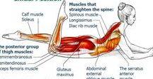 Zorgen voor je lichaam. Taking care of your body. / Sportoefeningen. Excercise.