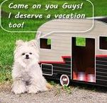 Camping with Dogs / Camping and caravanning with dogs can be challenging, check out these links to find dog friendly camp sites, and tips and tricks for travelling off road with your four legged friend.