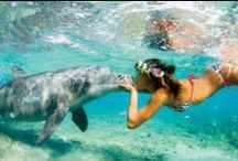 Creature Feature / Animals and creatures in Hawaii. / by Discover Hawaii Tours